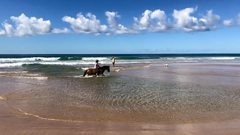 Horses on Diamond Beach