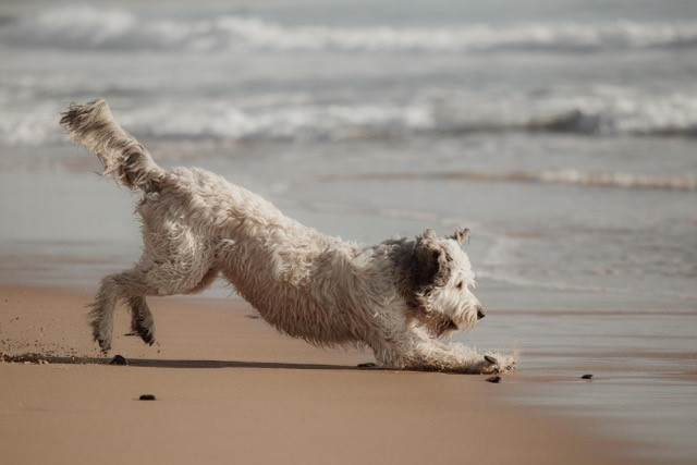 Small dog playing on beach