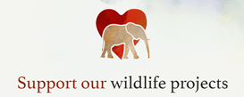 Support our wildlife projects