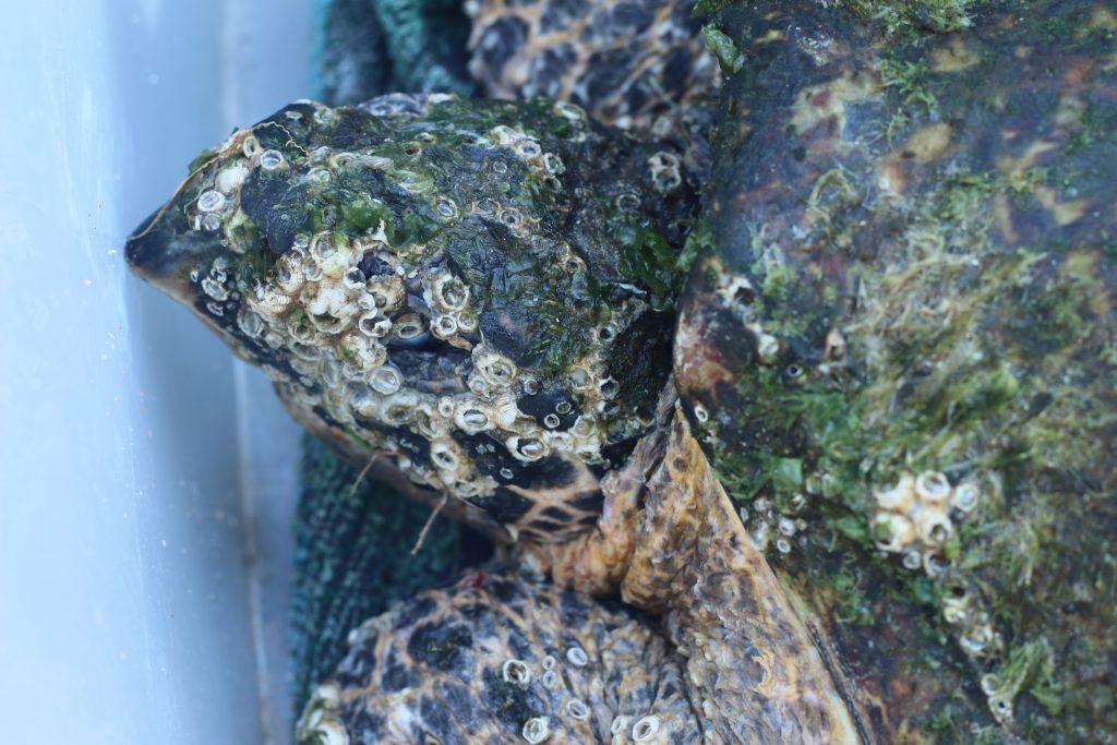 Sick Sea Turtles